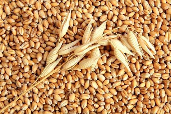 Вживання зерна знижує ризик ранньої смерті Поштівка