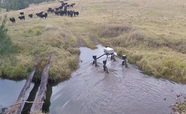 В Австралії випробували першого робота-пастуха Поштівка