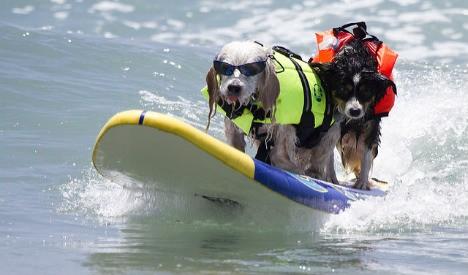 У Барселоні відкрили перший пляж для собак Поштівка