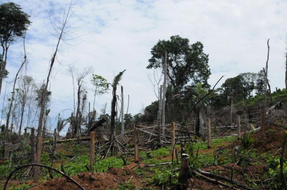 58% екосистем Землі в критичному стані Поштівка