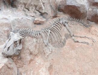 Палеонтологи знайшли рештки динозавра, який мав пухлину щелепи Поштівка