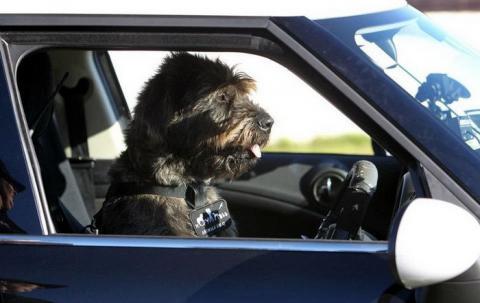 В Америці дві собаки викрали автівку та протаранили нею магазин Поштівка