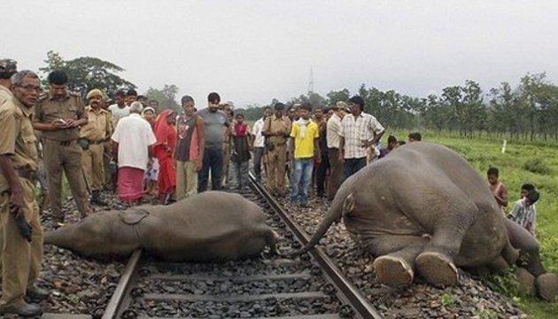 В Індії пасажирський потяг протаранив стадо слонів Поштівка