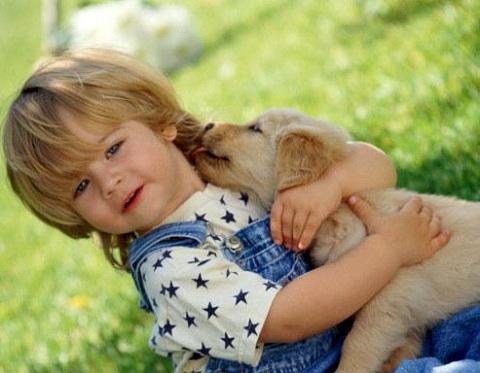 Сім причин завести собаку Поштівка