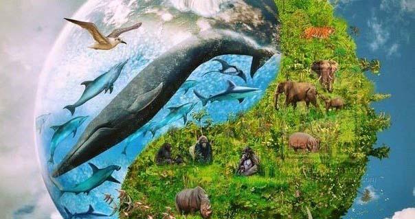 Нова Зеландія визнала тварин розумними істотами Поштівка