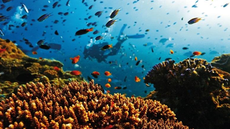 риф, корали
