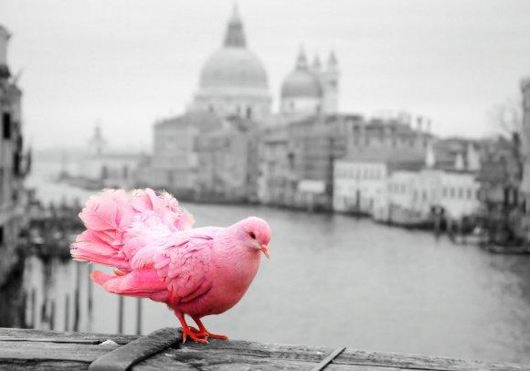 Рожевий колір пригнічує агресію: цікава теорія Шаусса Поштівка image 1