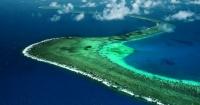 Великий Бар'єрний риф втратив третину коралів Поштівка