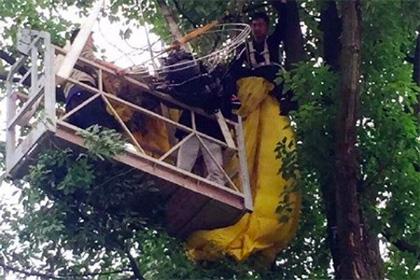 Китаєць застряг на дереві під час спроби зробити дівчині пропозицію Поштівка