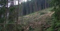 """""""Карпатська різанина"""": журналісти створили онлайн-карту вирубок лісів Поштівка image 1"""