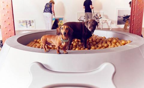 Відкрито першу в світі виставку для собак Поштівка