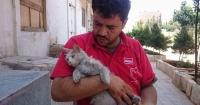 Чоловіка, який рятує бездомних котів у Сирії, пропонують висунути на Нобелівську премію Поштівка