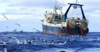 Українське рибальство за 20 років зменшилось у 4 рази