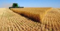 Аграрії вже намолотили 13 млн тонн зерна