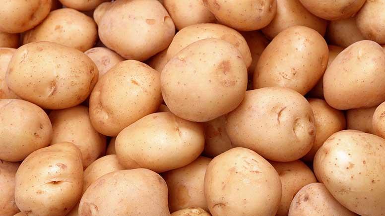 Високоякісну насіннєву картоплю в Україні вирощують голландці