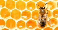 У декількох областях України повідомили про масову загибель бджіл